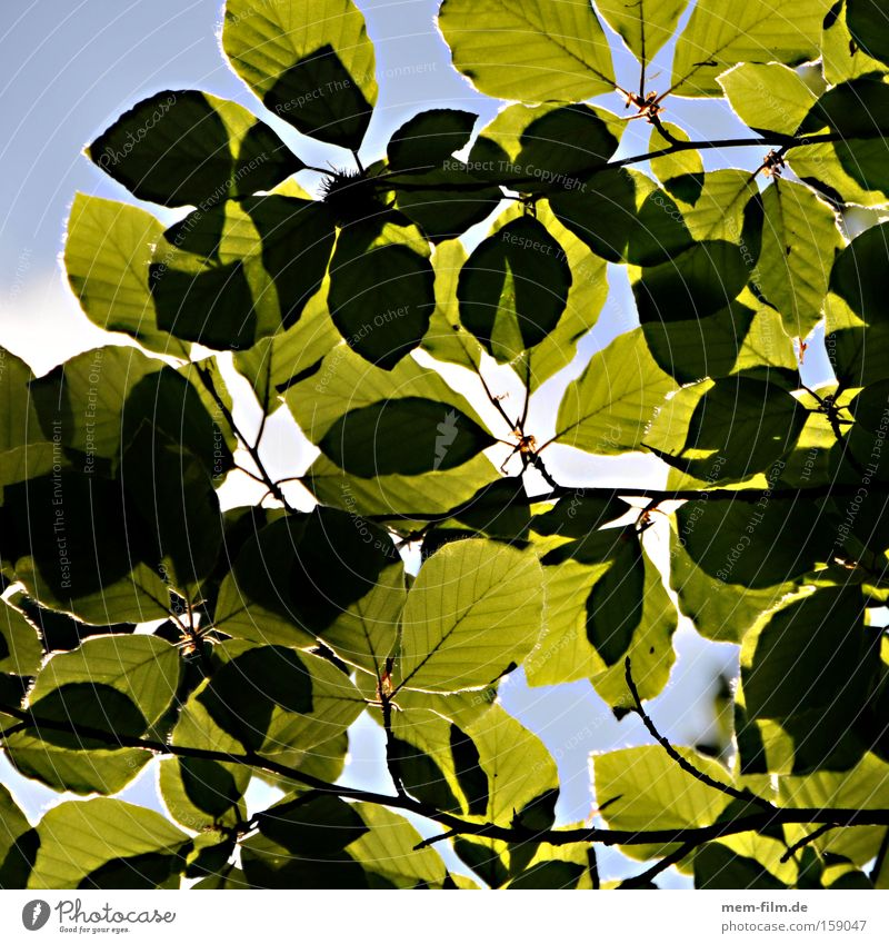 PHOTOsynthese Himmel Natur grün Sommer Erholung Blatt Umwelt Umweltschutz Klimawandel Umweltverschmutzung Synthese Buche Photosynthese Waldsterben