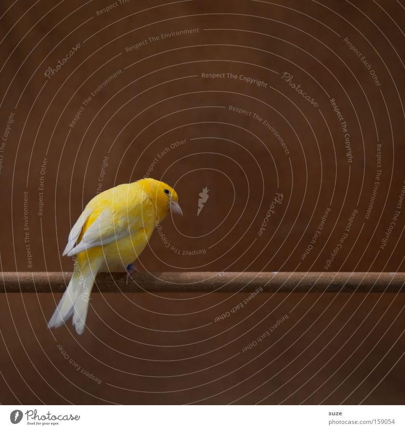 Das Gelbe vom Ei schön Einsamkeit Tier gelb lustig natürlich klein braun Vogel sitzen authentisch warten Feder niedlich Neugier Konzentration