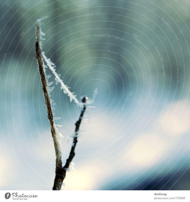 Bermudadreieck Winter kalt Schnee klein Eis Ast zart Zweig fein stachelig zerbrechlich Eiskristall Perlenkette