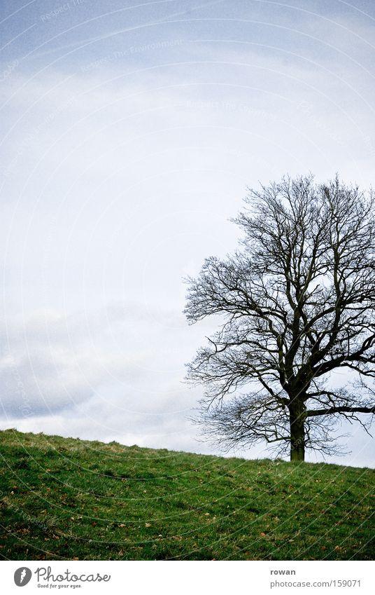 winter baum Natur Himmel Baum Winter ruhig Einsamkeit Wiese Gras Park leer ökologisch Zweig Geäst