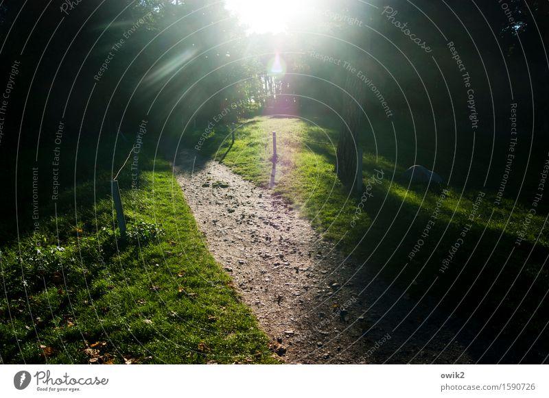 Lichterscheinung Umwelt Natur Landschaft Pflanze Baum Gras Wege & Pfade leuchten grün Idylle Farbfoto Außenaufnahme Menschenleer Textfreiraum links