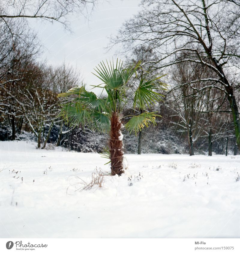 grün ist die hoffnung Baum Freude Winter Schnee Hoffnung Fluss Palme Ruhrgebiet Januar