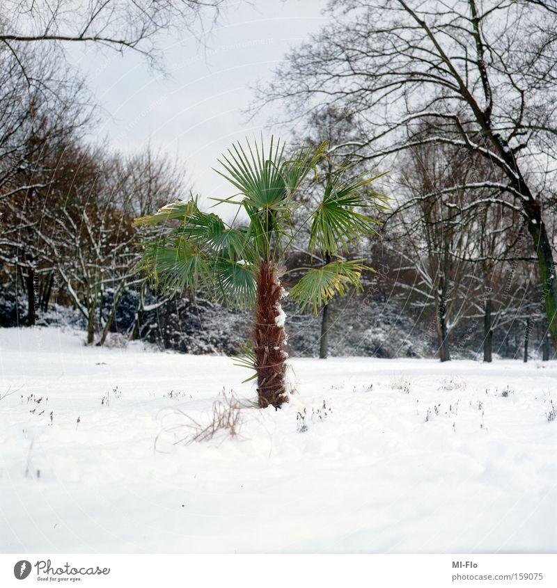 grün ist die hoffnung Palme Ruhrgebiet Fluss Schnee Winter Hoffnung Baum Freude Januar