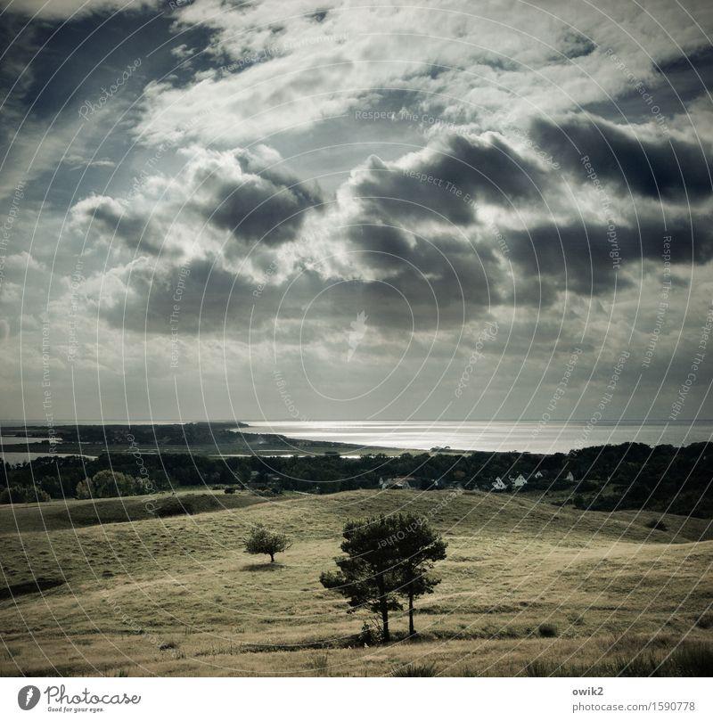 Herbst auf Hiddensee Umwelt Natur Landschaft Pflanze Wasser Himmel Wolken Horizont Klima Schönes Wetter Baum Gras Sträucher Ostsee Insel glänzend leuchten hell