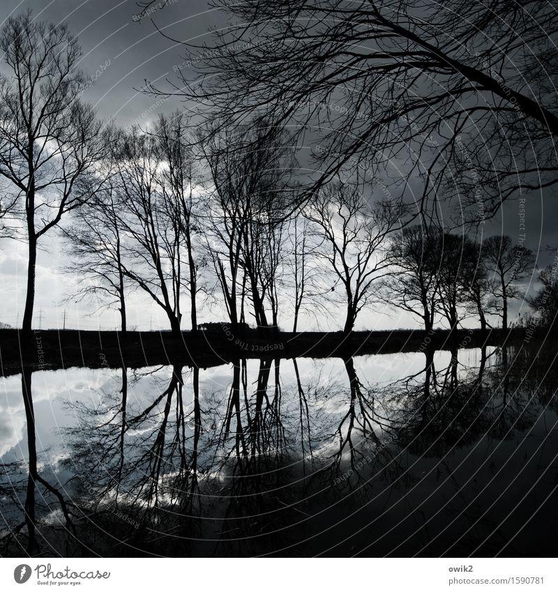 Die Elster bei Jessen Umwelt Natur Landschaft Pflanze Wasser Himmel Wolken Horizont Klima Schönes Wetter Baum Zweige u. Äste Flussufer Kanal Sachsen-Anhalt
