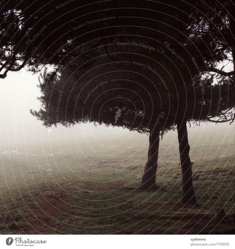 Dürre Beinchen Natur schön Baum Ferne Herbst Wiese Gefühle Wege & Pfade Landschaft Nebel leer retro Vergänglichkeit Sehnsucht analog Heimat