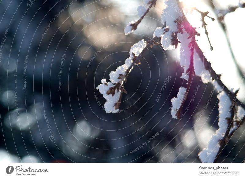 Wintermorgen Natur weiß kalt Schnee Eis Spaziergang Frost gefroren bezaubernd Verhext Winterspaziergang