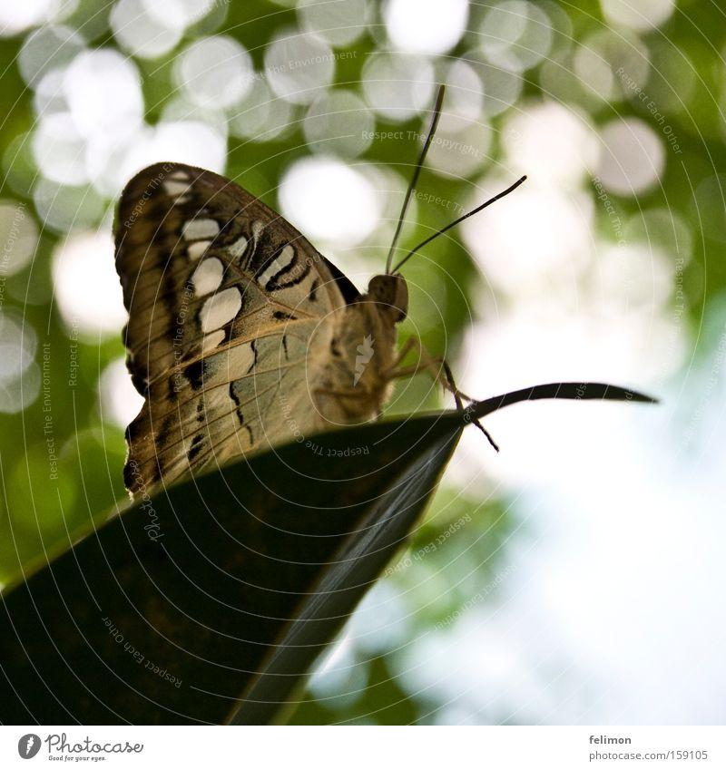 weiße punkte Blatt Beine klein Flügel Insekt zart Schmetterling Paradies Fühler