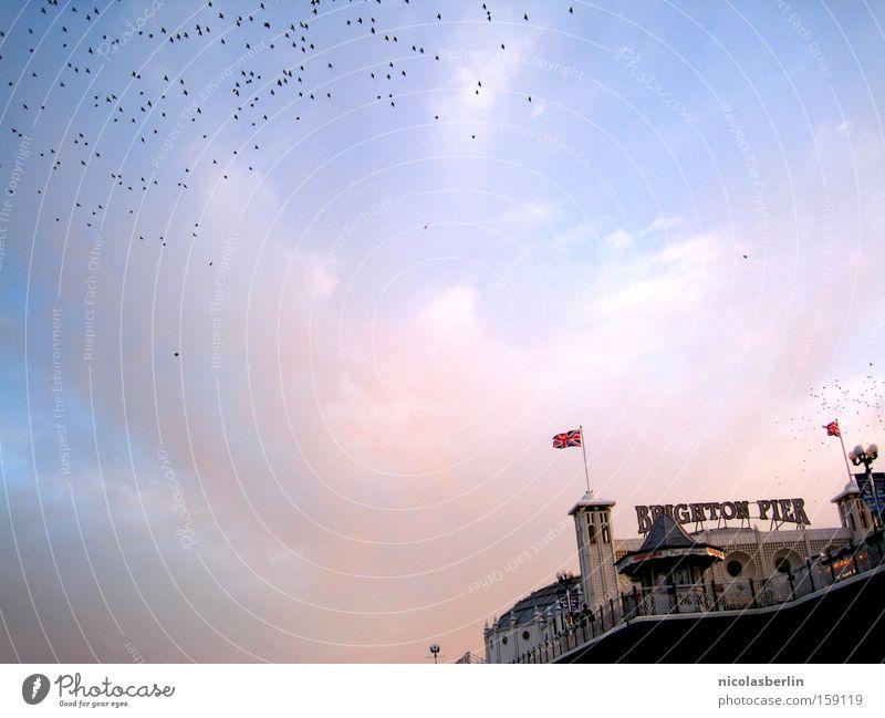 You Say Time Heals.. Brighton Anlegestelle Sonnenuntergang Meer Fahne Himmel blau rot Sehnsucht Vogel Hafen Wahrzeichen Denkmal sea sky blue