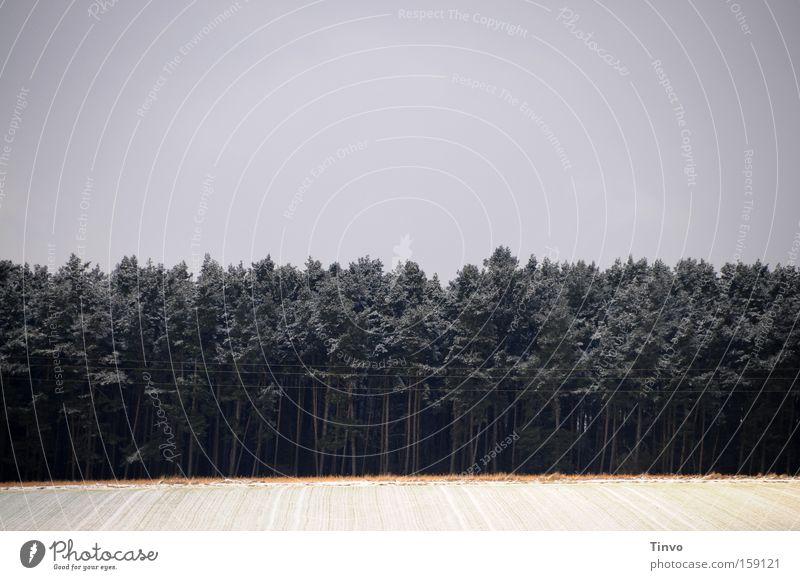 Und der Wald er steht so schwarz und leer Winter Einsamkeit Wald dunkel geschlossen geheimnisvoll Tanne Schneelandschaft Märchen unheimlich verborgen Unterholz abweisend