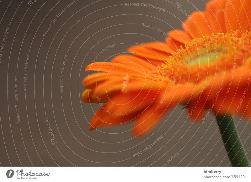 be orange Blume Blüte Frühling Pflanze Floristik Natur Blumenstrauß Hintergrundbild Geburtstag