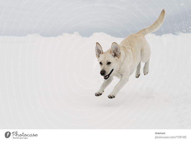 mein glücklicher Hund :-)) Natur schön Freude Winter Tier Schnee springen Bewegung Glück hell lustig rennen Fröhlichkeit Lebensfreude natürlich