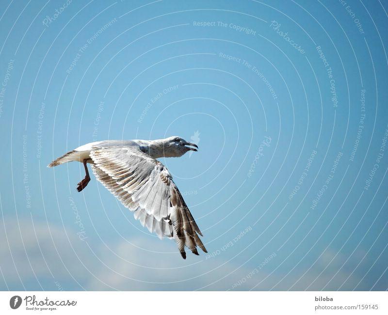 Flugangst Möwe Vogel Feder fliegen Hals Flügel Tragfläche dumm doof Ärger Wut Stress Nordsee Tier Meer gefährlich Luftverkehr Aspirin