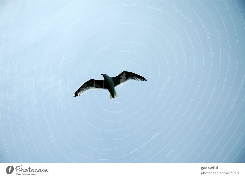 moeve Himmel Vogel Luftverkehr Flügel Schweben
