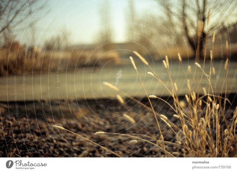Grastime Natur Winter Farbe Gras Stimmung Feld Beton Filmmaterial einfach analog Jahreszeiten Märchen Dia Brachland