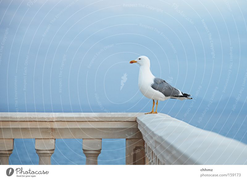 Gute Aussichten Möwe Vogel Meer Küste Ferne Geländer Brückengeländer Horizont See Insel Himmel