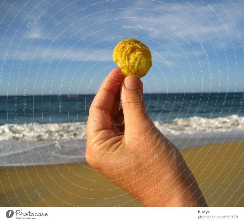 caribian sunshell Hand Wasser schön Himmel Meer blau Sommer Strand gelb Glück Sand hell Küste Wellen leuchten genießen