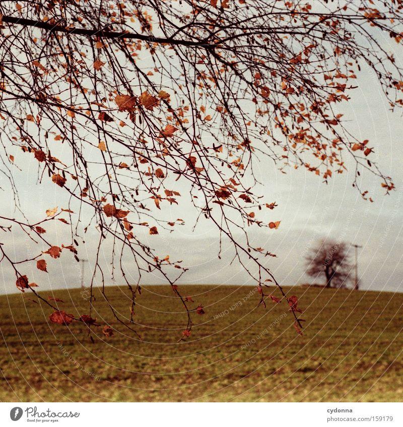 Die letzten Blätter Herbst Baum Natur Feld Landschaft Sehnsucht analog Ferne Ast Zweig Blatt Wind schön Luft