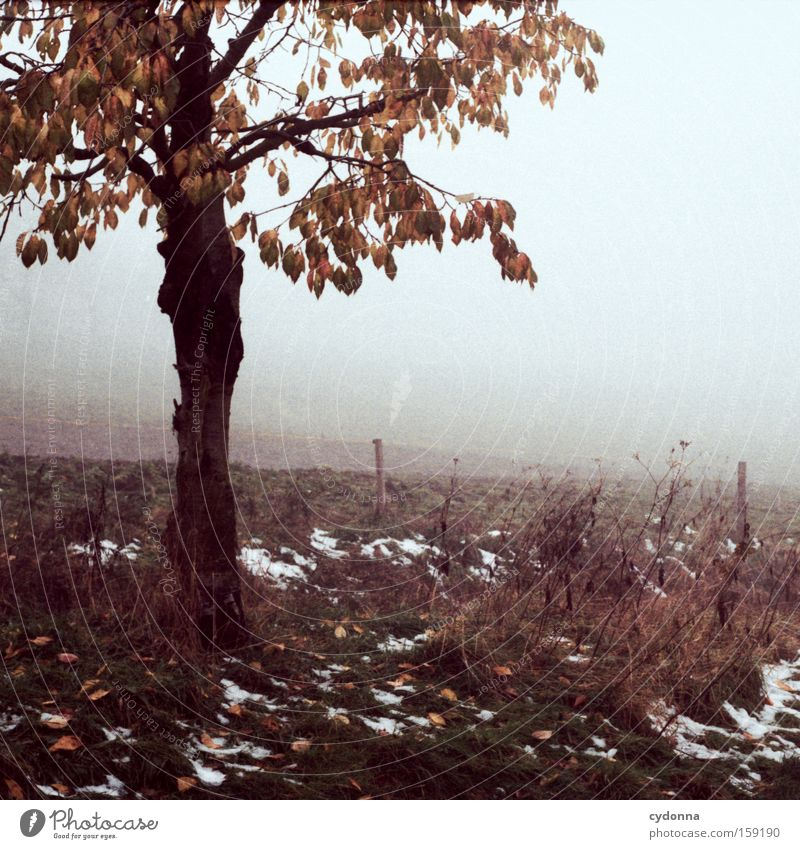 Der erste Schnee Natur schön Baum Blatt Ferne Herbst Landschaft Feld Nebel Ast Vergänglichkeit Sehnsucht analog Zweig