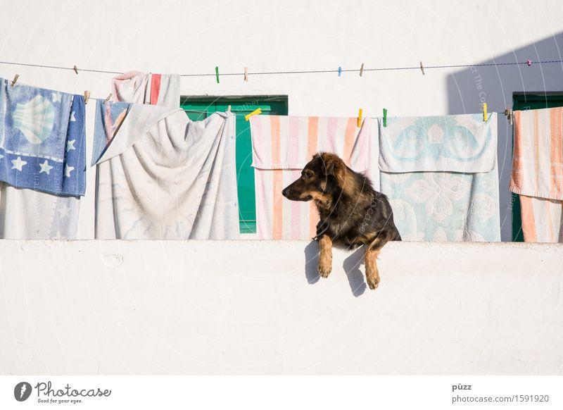 Guggst Du. Hund weiß Haus Tier Wärme Mauer Wohnung Häusliches Leben Sauberkeit Schnur Neugier Dorf Balkon Wachsamkeit Haustier Vorfreude