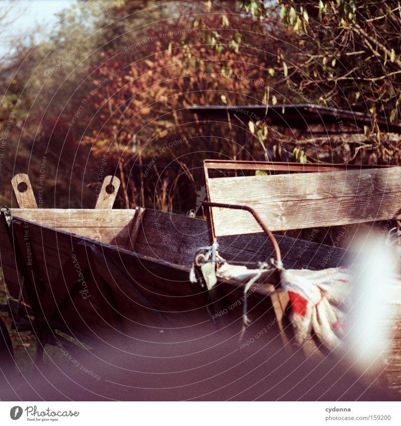 Kutsche Herbst Baum Natur Ferien & Urlaub & Reisen Sehnsucht analog Blatt mehrfarbig schön Pferdekutsche Landleben Güterverkehr & Logistik Holz Bauernhof Sonne