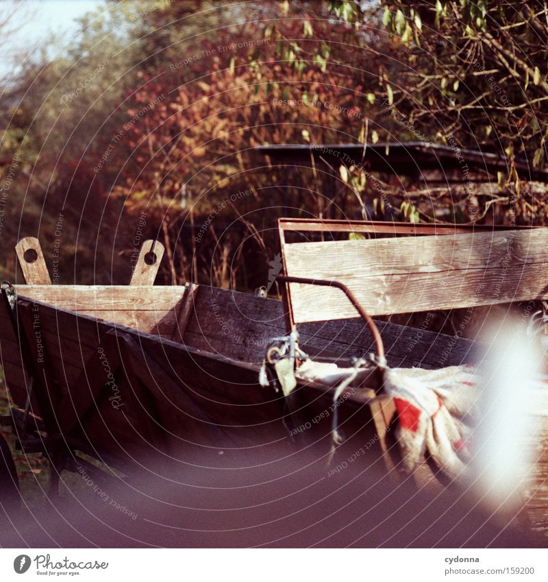 Kutsche Natur schön Baum Sonne Ferien & Urlaub & Reisen Blatt Leben Herbst Holz Güterverkehr & Logistik Bauernhof Sehnsucht Dinge analog Landleben Pferdekutsche