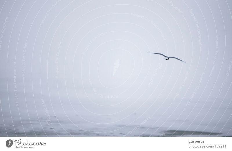 weite weisse wüste II weiß kalt Schnee Eis Vogel Coolness gefroren Schnellzug Möwenvögel