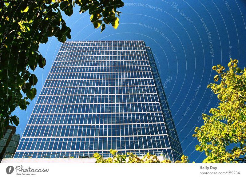 Glashaus im Rahmen Hochhaus Blauer Himmel neu Stadt hell Block Blatt Baum Klarer Himmel Wolkenloser Himmel Froschperspektive vertikal himmelwärts Glasfassade