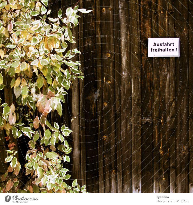 Ausfahrt freihalten II Schilder & Markierungen Hinweisschild Holz Wand Pflanze grün Heimat Wunsch Schriftzeichen Garage Tor Detailaufnahme Buchstaben