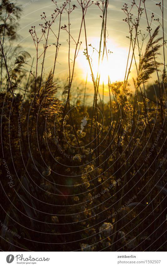 Gegenlicht again Abend Nebel Dunst Dämmerung Herbst Lein Natur Umweltschutz Naturschutzgebiet Nationalpark ruhig Sonnenuntergang blenden Sträucher Pflanze