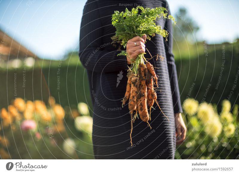 Möhren Mensch Jugendliche grün Junge Frau Sonne Leben feminin Gesundheit Garten orange Freizeit & Hobby Erde Gemüse Bioprodukte Ernte Gartenarbeit