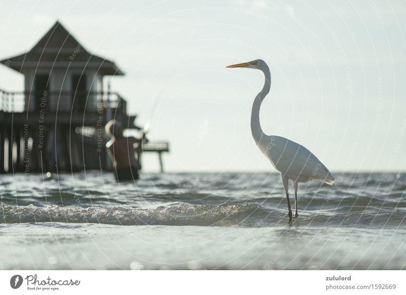 der Reiher Vogel türkis weiß Stolz Ferien & Urlaub & Reisen Angler Anlegestelle Meer Wellen Wasser nass Tier wasservogel Freizeit & Hobby Schwache Tiefenschärfe