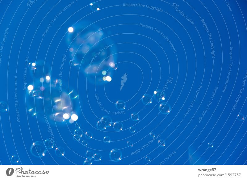 rund | Seifenblasenschwarm Freude Kinderfest glänzend groß lustig blau zart zerbrechlich platzen durchsichtig himmelwärts Blauer Himmel Wolkenloser Himmel