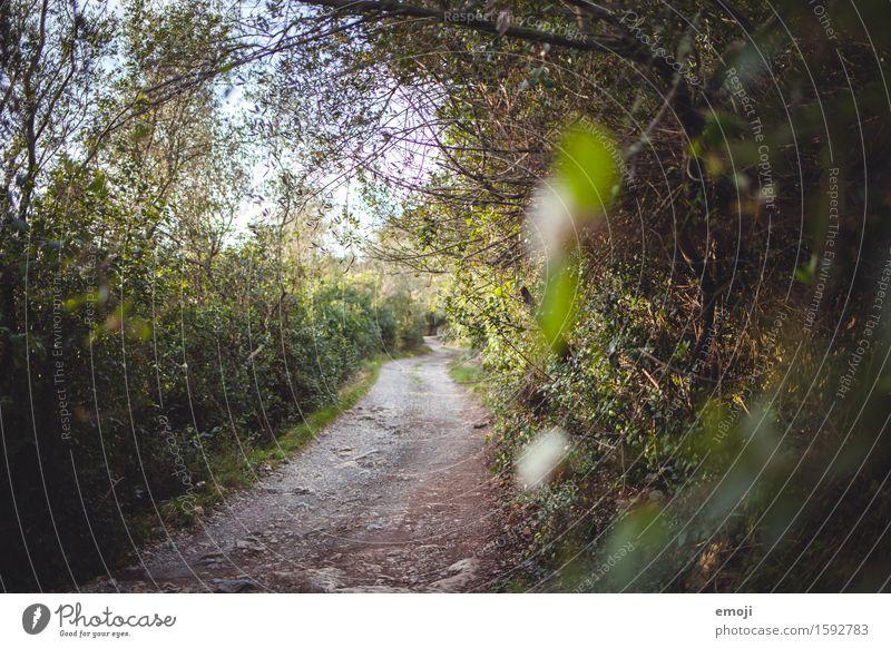Pfad Natur grün Sommer Landschaft Wald Umwelt Wege & Pfade natürlich Sträucher Schönes Wetter Fußweg