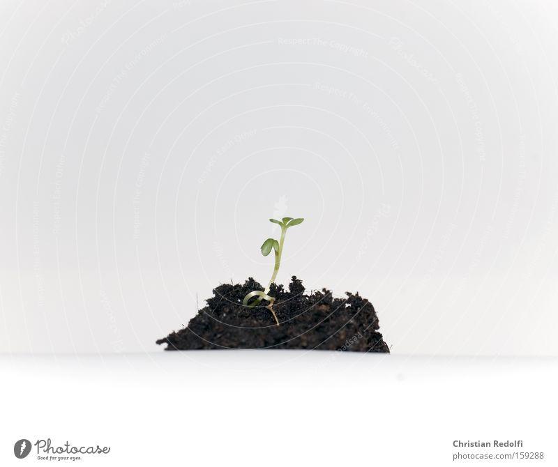Leben Pflanze Ernährung Sand Kraft Erde frisch Kräuter & Gewürze Bioprodukte Biologische Landwirtschaft Wurzel Trieb Wurzelgemüse Keim