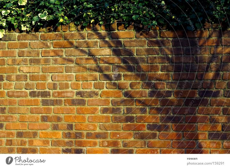 baumschatten Baum rot Wand Garten Mauer Backstein Grenze Hecke Illusion