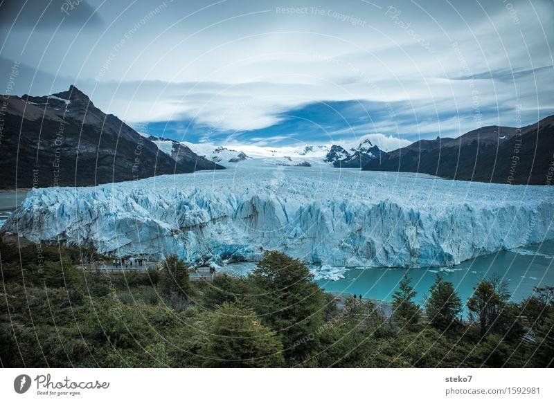 Perito Moreno Gletscher Eis Frost Wald Berge u. Gebirge Küste Fjord eckig gigantisch kalt blau weiß Klima Wandel & Veränderung Am Rand Gletscherzunge