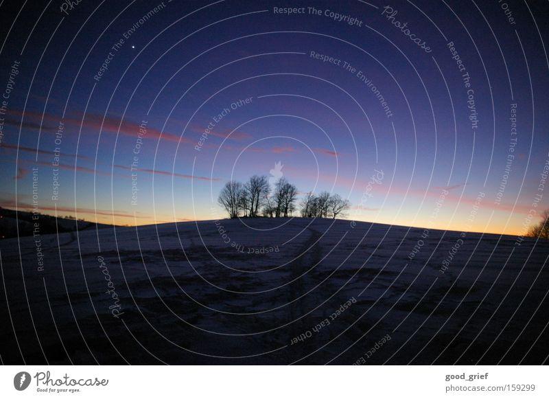 to leaf marks Baum Himmel Wolken Abenddämmerung Sonnenuntergang Winter Berge u. Gebirge Schnee