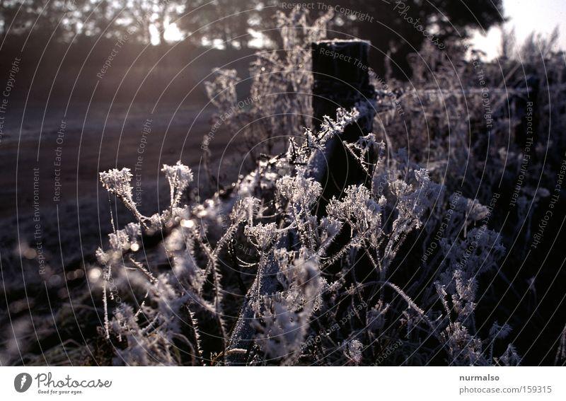 dann doch noch eins Natur Pflanze Winter kalt Schnee Feld Europa Frost einfach Zaun Jahreszeiten Verfall Tau welk Mecklenburg-Vorpommern Maschendraht