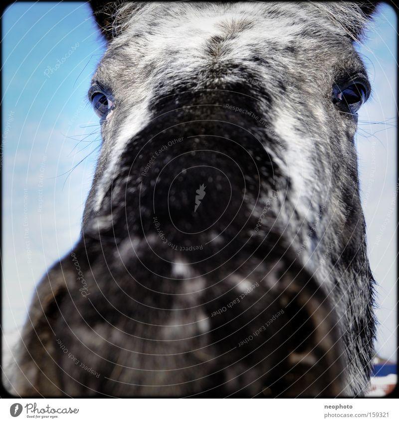 Mr. Ed Pferd dumm Neugier Nase Fell Tier Auge groß Trauer Schimmel eng Justizvollzugsanstalt Weitwinkel Außenaufnahme Weide Säugetier Traurigkeit