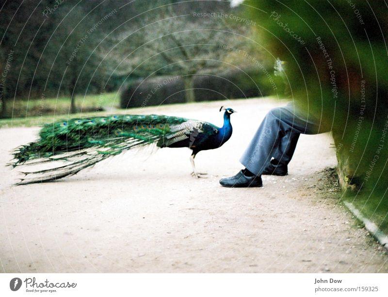 hungrig Natur grün Baum Pflanze Tier Ernährung sprechen Garten Park Zusammensein Vogel sitzen natürlich Sträucher Kommunizieren Feder