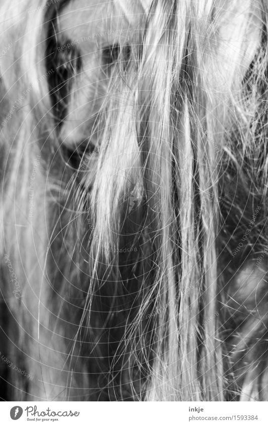 Moshmatte Lifestyle Stil maskulin feminin androgyn Frau Erwachsene Mann Jugendliche Leben Haare & Frisuren Gesicht 1 Mensch Subkultur Metalcore blond langhaarig