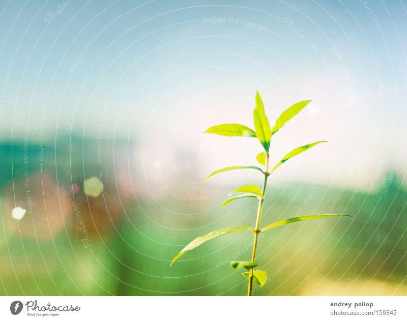 Natur Baum grün Pflanze gelb Farbe Frühling hell