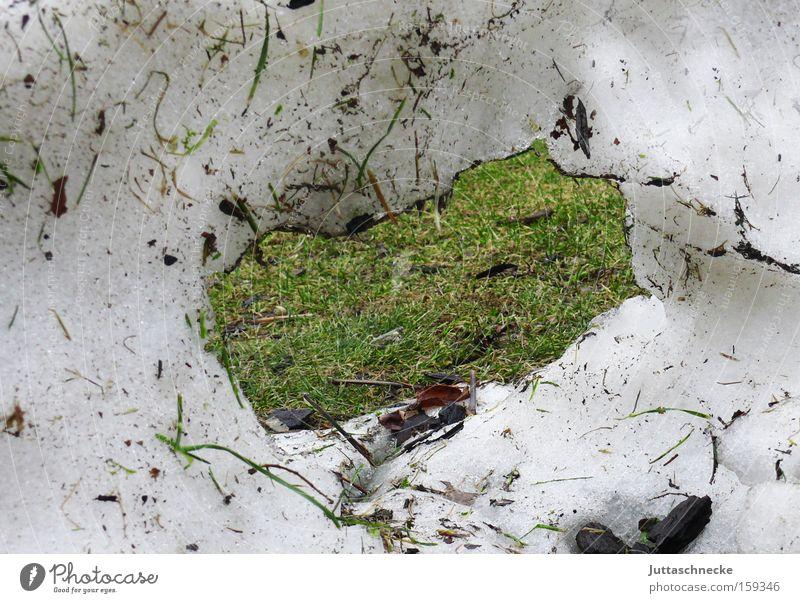Das Fenster zum Frühling Freude Winter Schnee Wiese Gras Loch Rest März tauen zuletzt Tauwetter