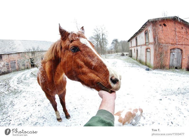 Brav Tier Pferd 1 Zufriedenheit Winter Bauernhof Hund Hand Farbfoto Außenaufnahme Tag