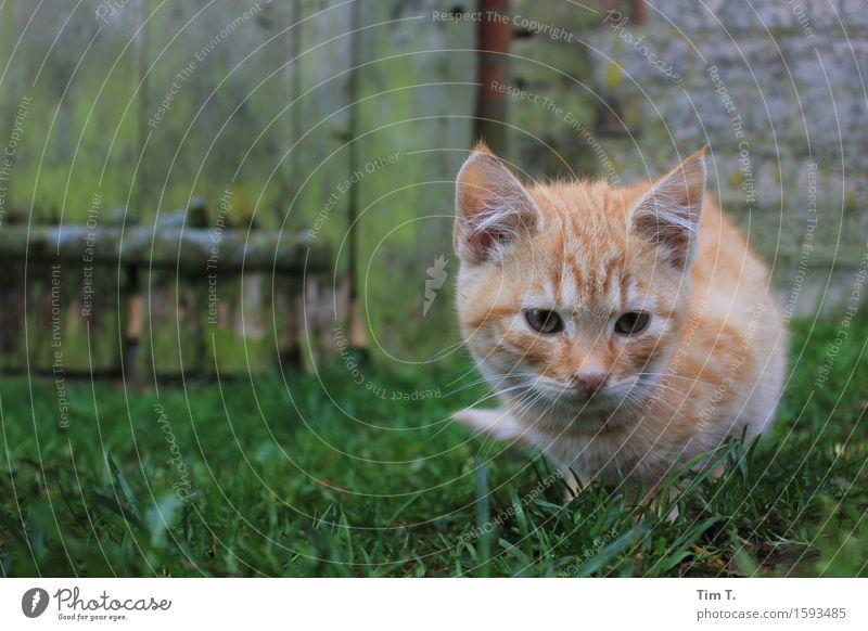 Katze Katze Tier Senior Bauernhof Haustier