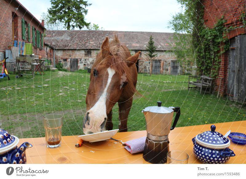 Moin Tier Freude Kaffee Pferd Bauernhof Frühstück Nutztier