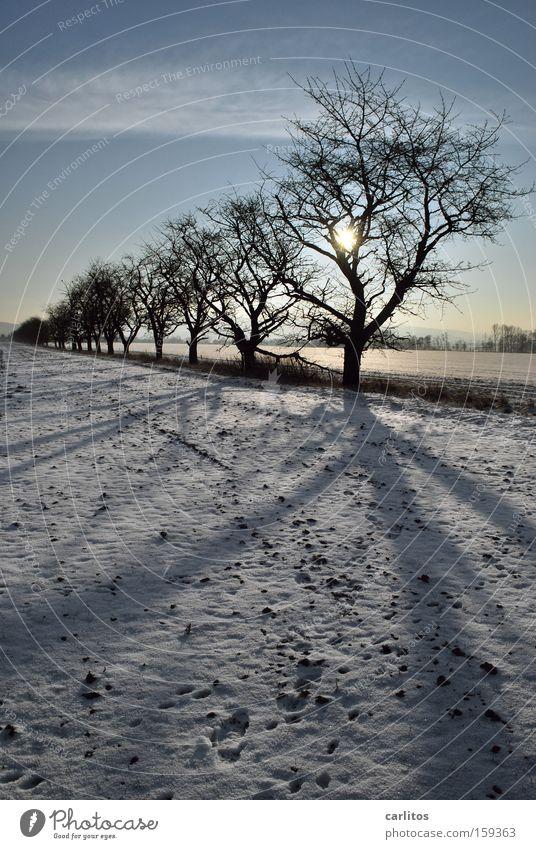 Déjà Vu Baum Winter Ferne Schnee Ordnung skurril aufgereiht Winterspaziergang