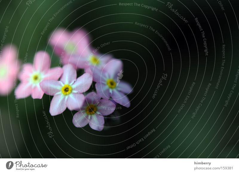 danke für die blumen Natur Pflanze schön Blume Frühling Blüte Hintergrundbild Park frisch ästhetisch Floristik Gartenbau