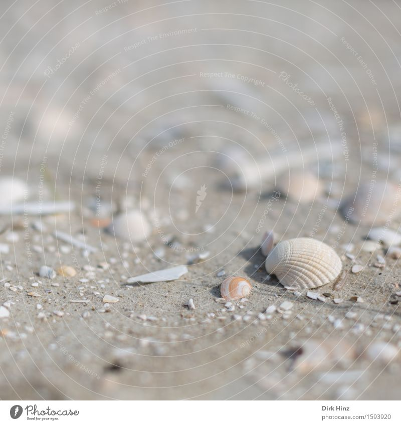 Muschelsand Natur Ferien & Urlaub & Reisen Sommer Meer Ferne Strand Umwelt Küste Freiheit Sand Tourismus Ausflug Insel Wellness Ostsee Wohlgefühl